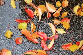 water-asphalt-leaves-road