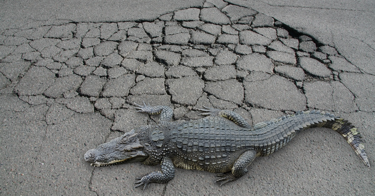 wolf-paving-alligator-cracking-asphalt.jpg