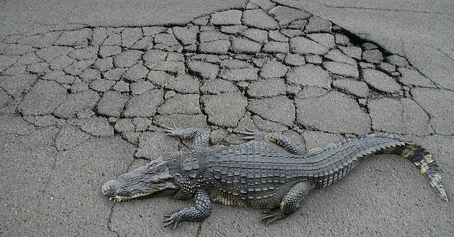 wolf-paving-alligator-cracking-asphalt.jpg